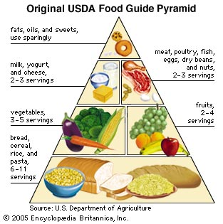 Using the Food Pyramid in the Preparation of Food