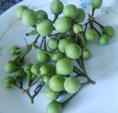 Green Sundakkai - Pachai Sundakkai (Raw Turkey Berry) Fry