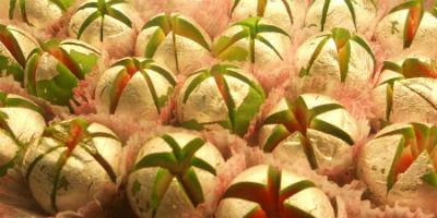 Kaju Flower - Kaju Flower