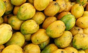 Mango Madness - King of Fruits