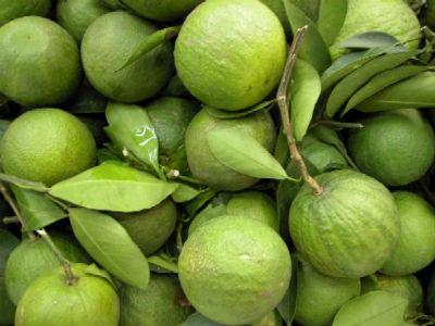 Narthangai Citron - Narthangai Pachadi