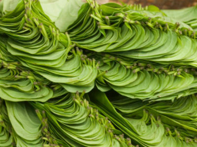 betel leaf - Betel Leaf Rice (Vetrilai Sadam)