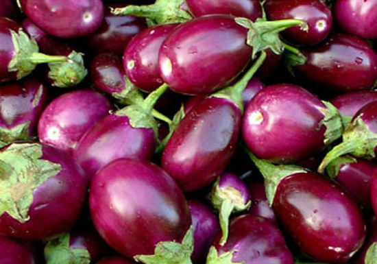 brinjals eggplant aubergine - All about Brinjals - Benefits and Uses