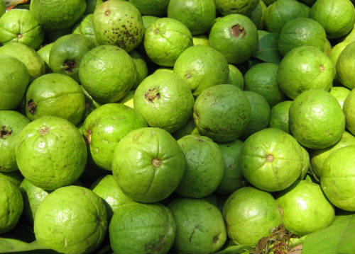 guava fruit - Health and Nutritional Benefits of Guava