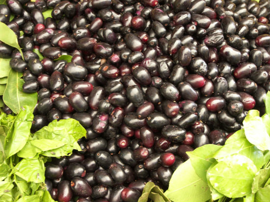 purple berry jamun - Health Benefits of Jamun