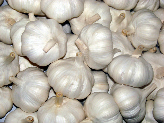 white garlic - Why You Should Eat Garlic