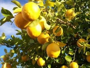 Benefits of Lemon - Chukandri Tangri Kebab