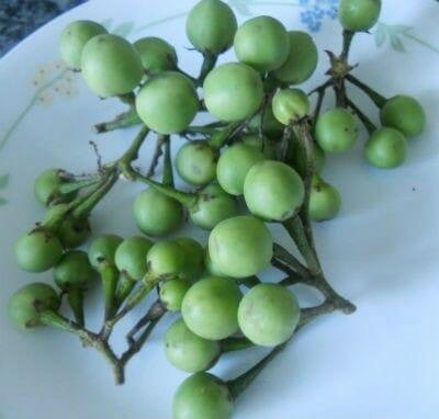 Green Sundakkai - Green Sundakkai Poriyal
