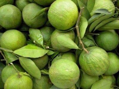 Narthangai (Citron)