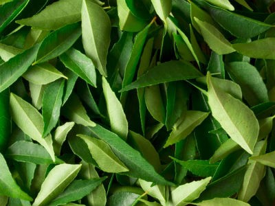 curry leaves - Karuvepilai Podi (Curry Leaves Powder)