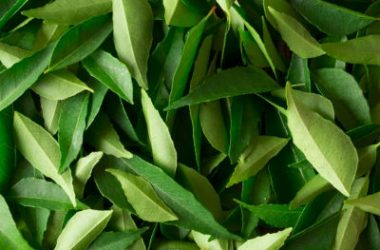 curry leaves2 380x250 - Garlic, Onion and Curry Leaves Kuzhambu