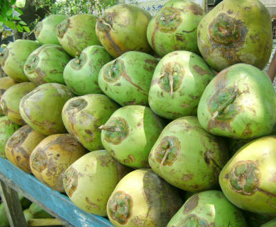 tender coconut - Beat the Summer Heat with Fruits and Juices