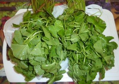 Herbal (Mooligai) Chutney