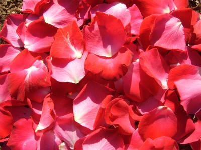 red rose petals - Rose Petal Soup