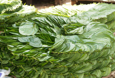 betel leaves - Betel Rasam