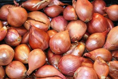 shallots / samba onions