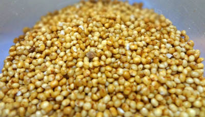 how to grow foxtail millet