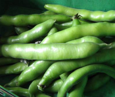broad beans - Baby Avarakkai (Broad Beans) Kootu