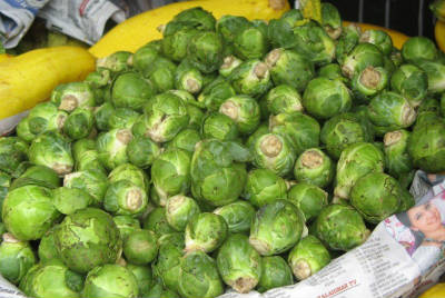 ooty cabbage