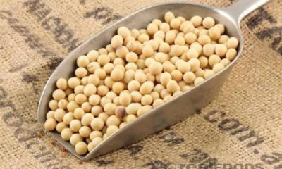 Soya Beans Sambar