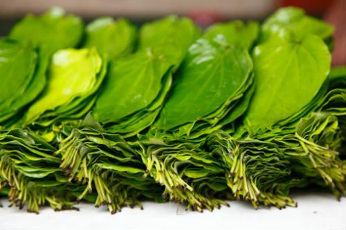 betel leaves - Betel Leaf Garlic Rice (Vetrilai Poondu Sadam)
