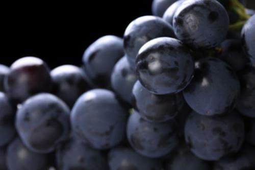 black grapes - Black Grape Sherbet