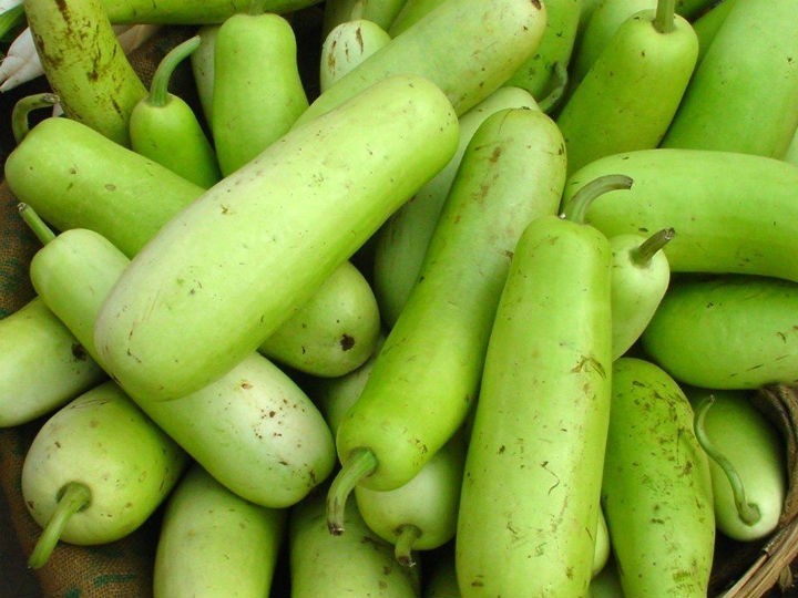 bottle gourd - All about Bottle Gourd