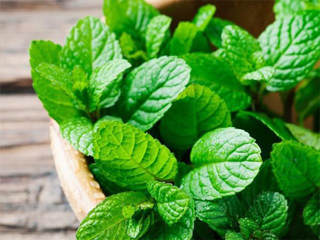 peppermint - 7 best remedies to cure a food hangover