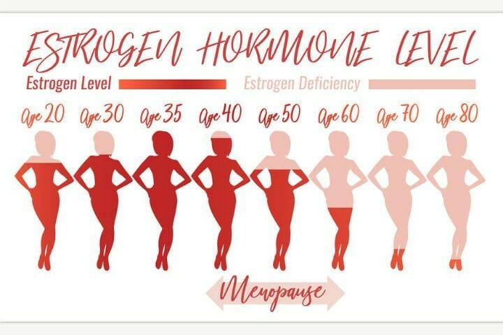 Estrogen level - Menopause, Estrogen, Woman's Health and Food